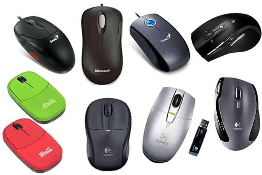Tipos De Mouse Rat N Y Sus Caracter Sticas
